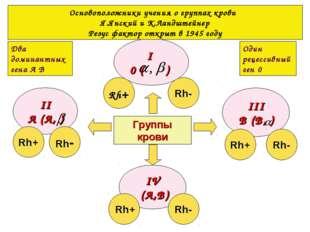 Группы крови I 0 ( ) IV (А,В) II А (А, ) III В (В, ) Rh+ Rh- Rh+ Rh- Rh- Rh+