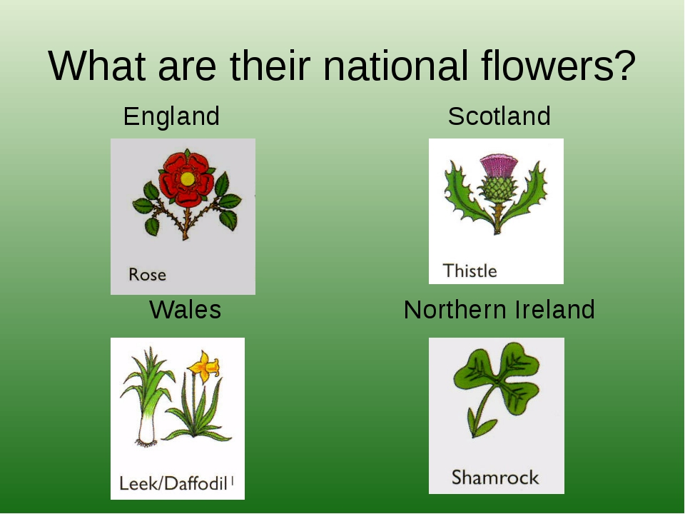 What are their national flowers? England Wales Scotland Northern Ireland