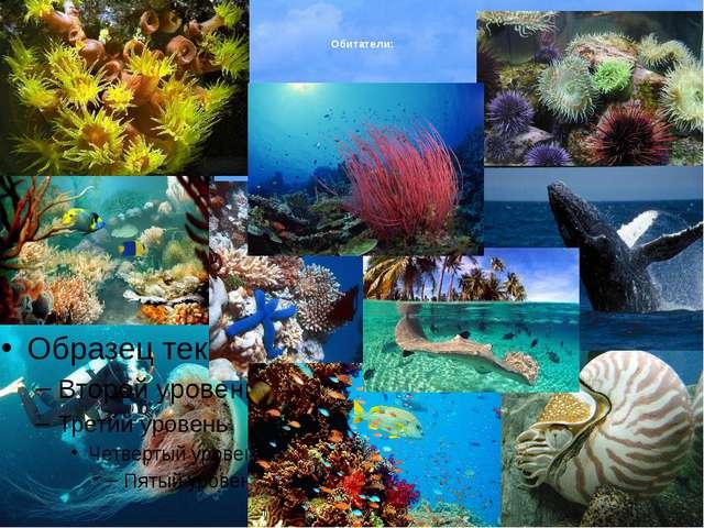 Атлантический океан Свое название Атлантический океан получил от Атласких гор...