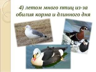 4) летом много птиц из-за обилия корма и длинного дня