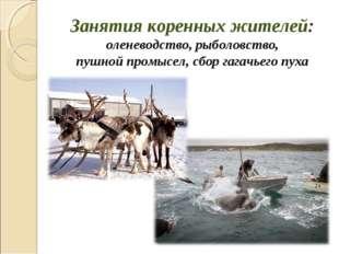 Занятия коренных жителей: оленеводство, рыболовство, пушной промысел, сбор га