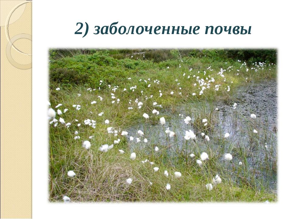 2) заболоченные почвы