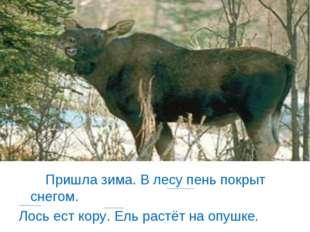 Пришла зима. В лесу пень покрыт снегом. Лось ест кору. Ель растёт на опушке.