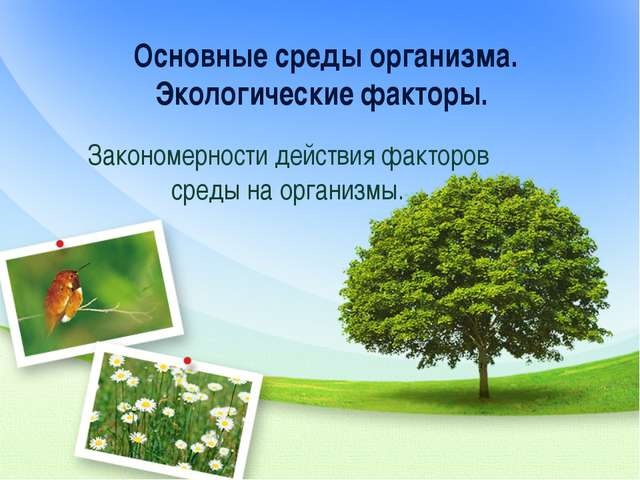 Основные среды организма. Экологические факторы. Закономерности действия факт...