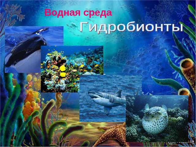 Водная среда