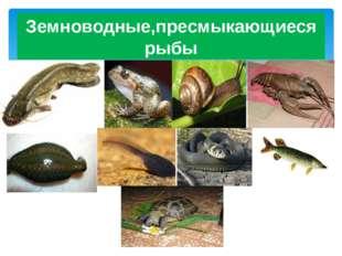 Земноводные,пресмыкающиеся рыбы