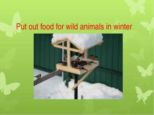 Put out food for wild animals in winter
