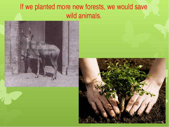 If we planted more new forests, we would save wild animals.