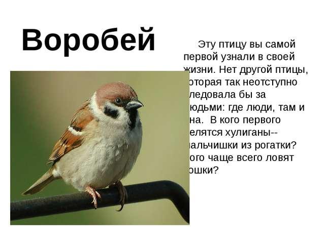 Воробей Эту птицу вы самой первой узнали в своей жизни. Нет другой птицы, кот...