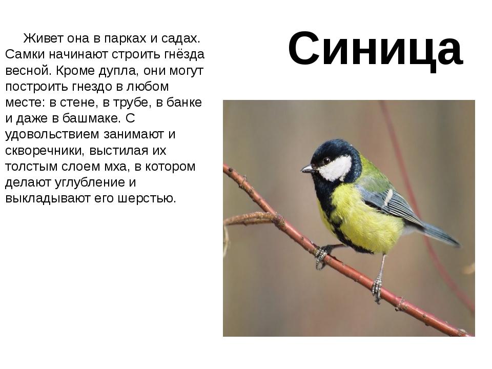 Анимированная сорбонка викторины Раскраска птицы зимой для