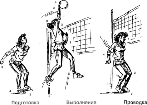 http://bmsi.ru/_uf/image/%D0%91_%D0%9B__%D0%92%D0%B8%D0%B5%D1%80%D0%B0__%D0%91_%D0%94__%D0%A4%D0%B5%D1%80%D0%B3%D1%8E%D1%81%D0%BE%D0%BD(56).jpg