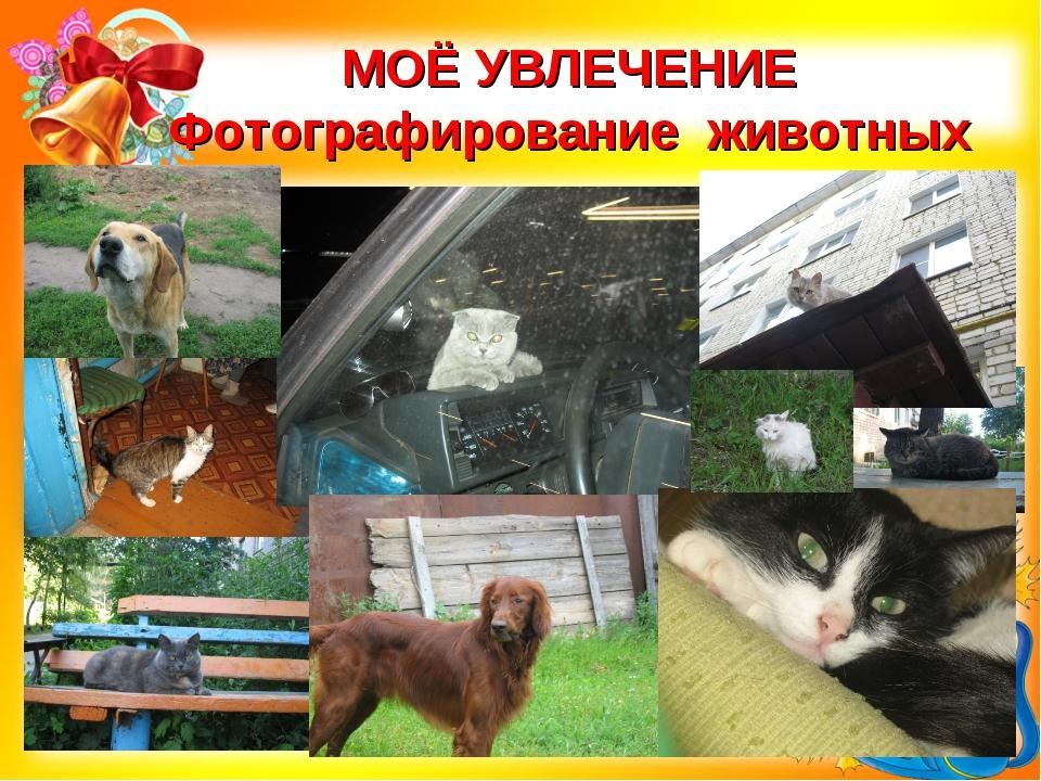 МОЁ УВЛЕЧЕНИЕ Фотографирование животных