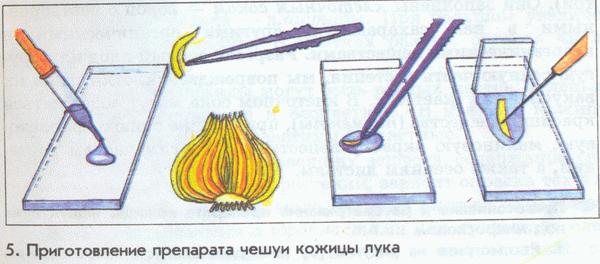 http://fs.nashaucheba.ru/tw_files2/urls_3/1545/d-1544285/1544285_html_204d5bb.png