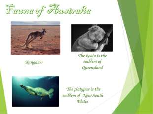 The koala is the emblem of Queensland The platypus is the emblem of New South