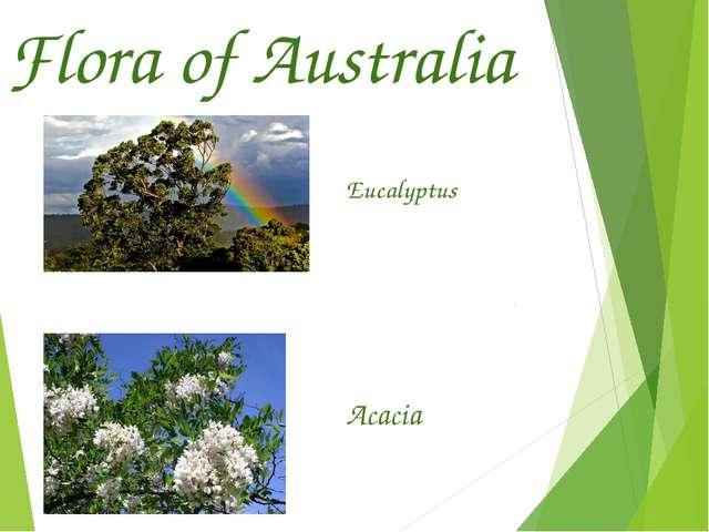 Flora of Australia Eucalyptus Acacia