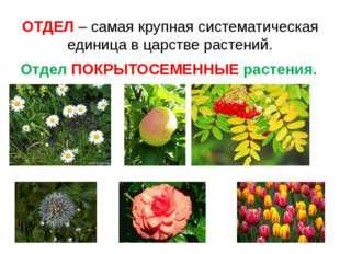 ОТДЕЛ – самая крупная систематическая единица в царстве растений. Отдел ПОКРЫ