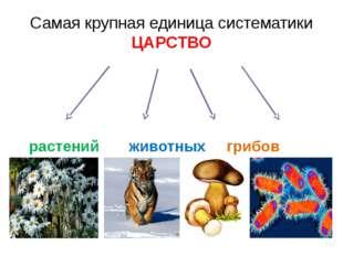 Самая крупная единица систематики ЦАРСТВО растений животных грибов бактерий