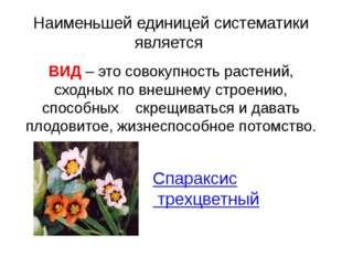Наименьшей единицей систематики является ВИД – это совокупность растений, схо