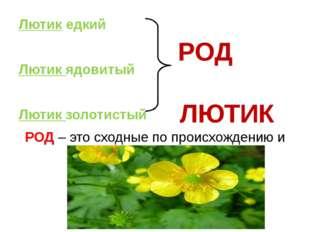 Лютик едкий Лютик ядовитый Лютик золотистый РОД – это сходные по происхождени