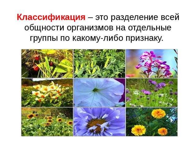Классификация – это разделение всей общности организмов на отдельные группы п...