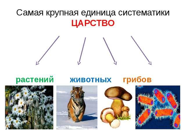 Не относится ни к миру растений, ни к миру животных