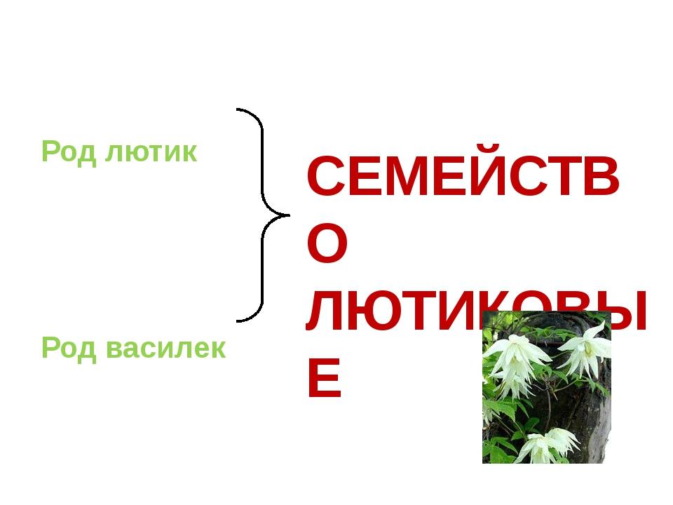 Род лютик Род василек СЕМЕЙСТВО ЛЮТИКОВЫЕ
