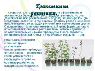 Современные гербициды значительно эффективнее и экологически безопаснее своих