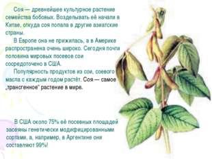 Соя — древнейшее культурное растение семейства бобовых. Возделывать её начали