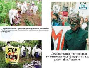 Демонстрация противников генетически модифицированных растений в Лондоне. Про
