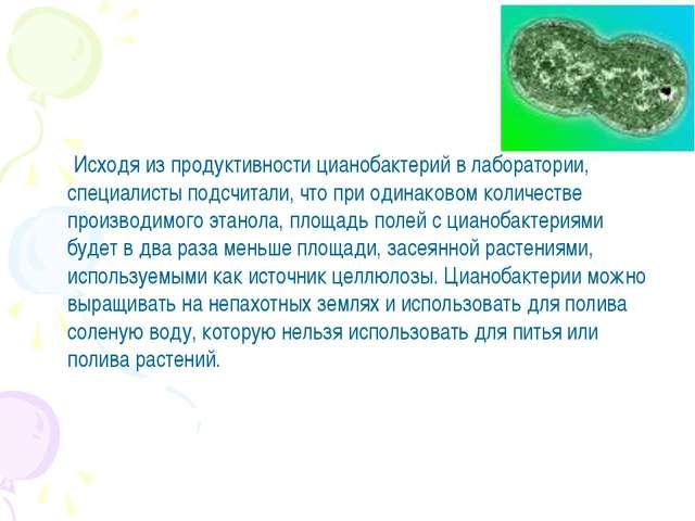 Исходя из продуктивности цианобактерий в лаборатории, специалисты подсчитали...