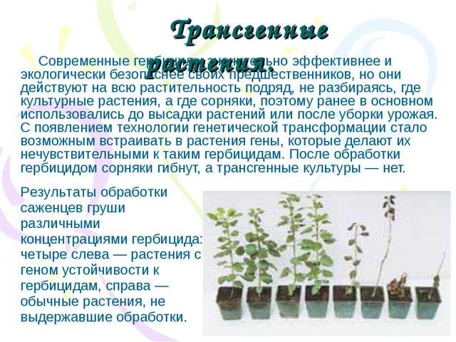 Современные гербициды значительно эффективнее и экологически безопаснее своих...