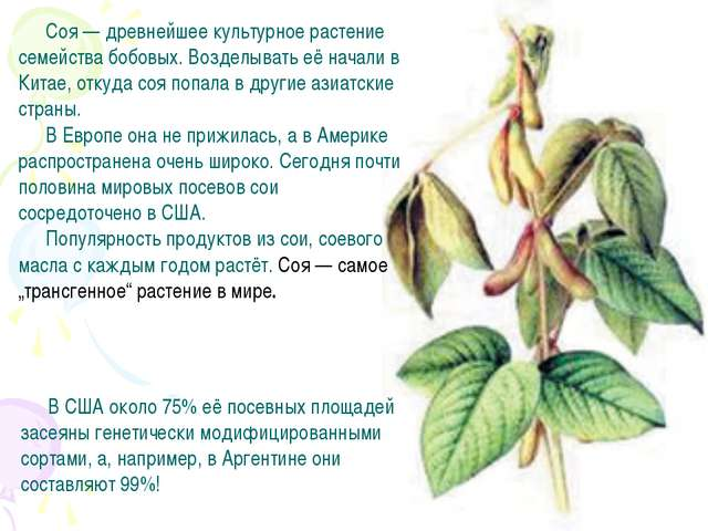 Соя — древнейшее культурное растение семейства бобовых. Возделывать её начали...