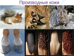 Производные кожи
