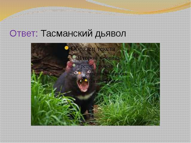 Ответ: Тасманский дьявол