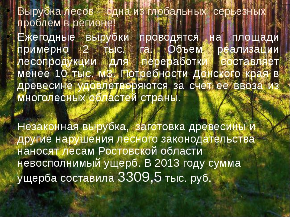 Вырубка лесов – одна из глобальных серьезных проблем в регионе! Ежегодные выр...