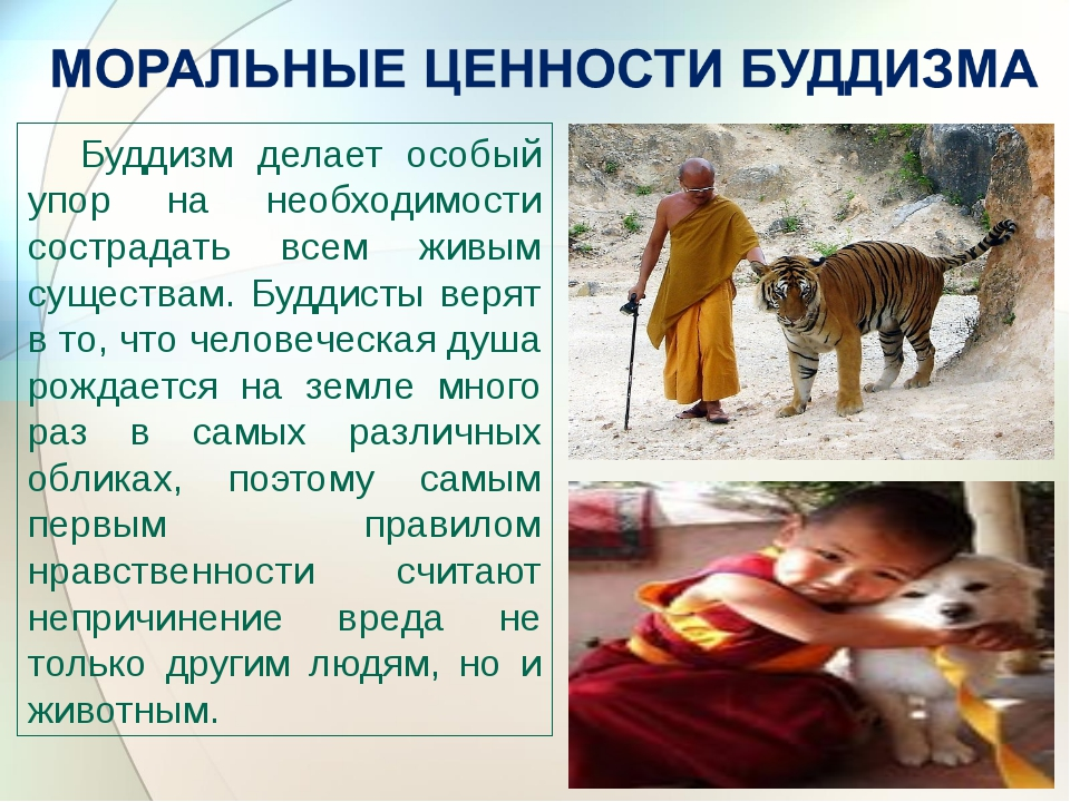 Буддизм делает особый упор на необходимости сострадать всем живым существам....