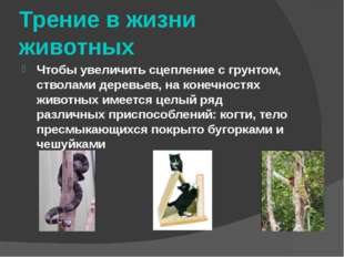 Трение в жизни животных Чтобы увеличить сцепление с грунтом, стволами деревье