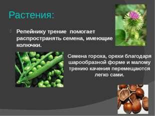 Растения: Репейнику трение помогает распространять семена, имеющие колючки. С