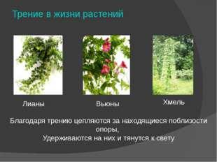Трение в жизни растений Лианы Хмель Вьюны Благодаря трению цепляются за наход
