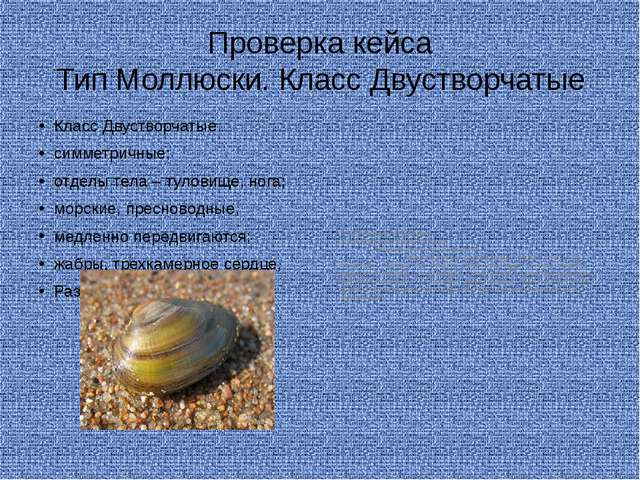Проверка кейса Тип Моллюски. Класс Двустворчатые Класс Двустворчатые симметри...