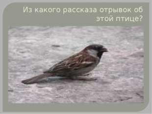 Из какого рассказа отрывок об этой птице?