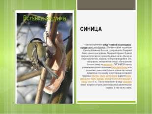 СИНИЦА —распространённаяптицаизсемействасиницевых,отрядаворобьинообразн