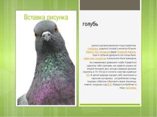 голубь широко распространённая птица семействаголубиных, родиной которой сч