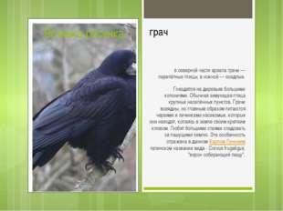 грач всеверной части ареала грачи— перелётные птицы, в южной— оседлые. Гне