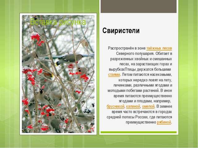 Свиристели Распространён в зонетаёжных лесовСеверного полушария. Обитает в...