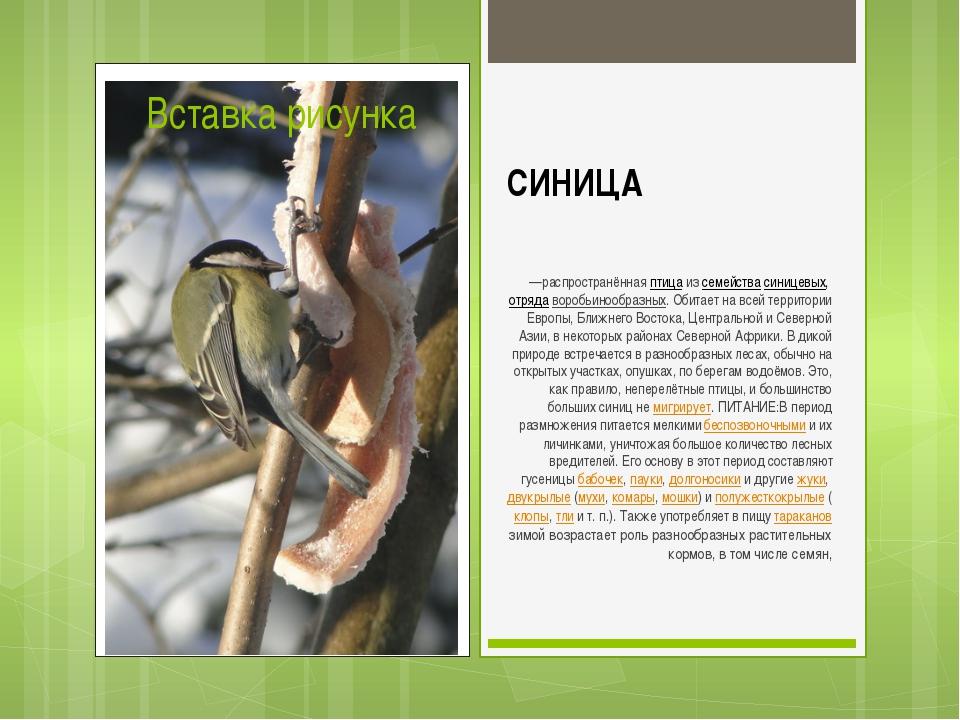 СИНИЦА —распространённаяптицаизсемействасиницевых,отрядаворобьинообразн...