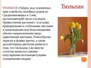 ТЮЛЬПАН (Tulipa), род луковичных трав семейства лилейных родом из Средиземном