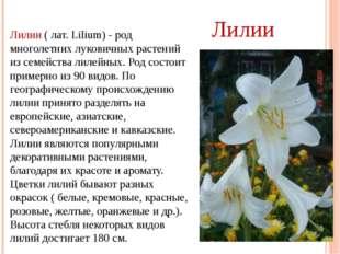 Лилии ( лат. Lilium) - род многолетних луковичных растений из семейства лилей