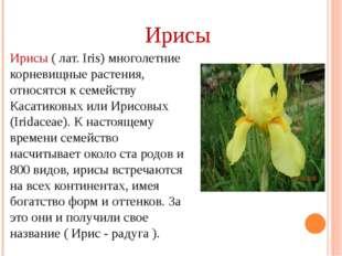 Ирисы ( лат. Iris) многолетние корневищные растения, относятся к семейству Ка