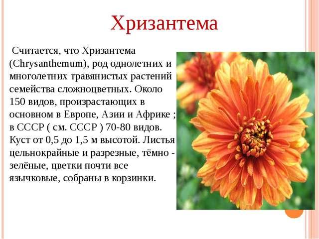 Считается, что Хризантема (Chrysanthemum), род однолетних и многолетних трав...